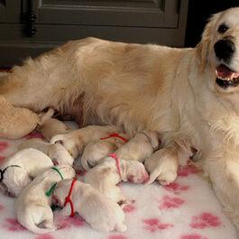 Pups Nyah en Gibbs de eerste week