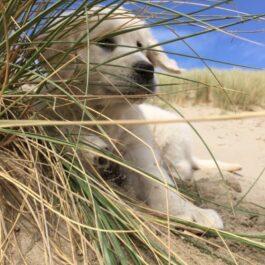 Dagje strand…