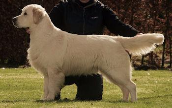 george-pups1